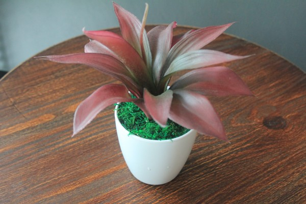 DCF0034 ALOE POTTED2